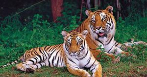 Bangalore One Day Trip Package