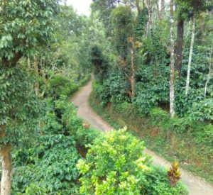 Coorg Weekend Packages