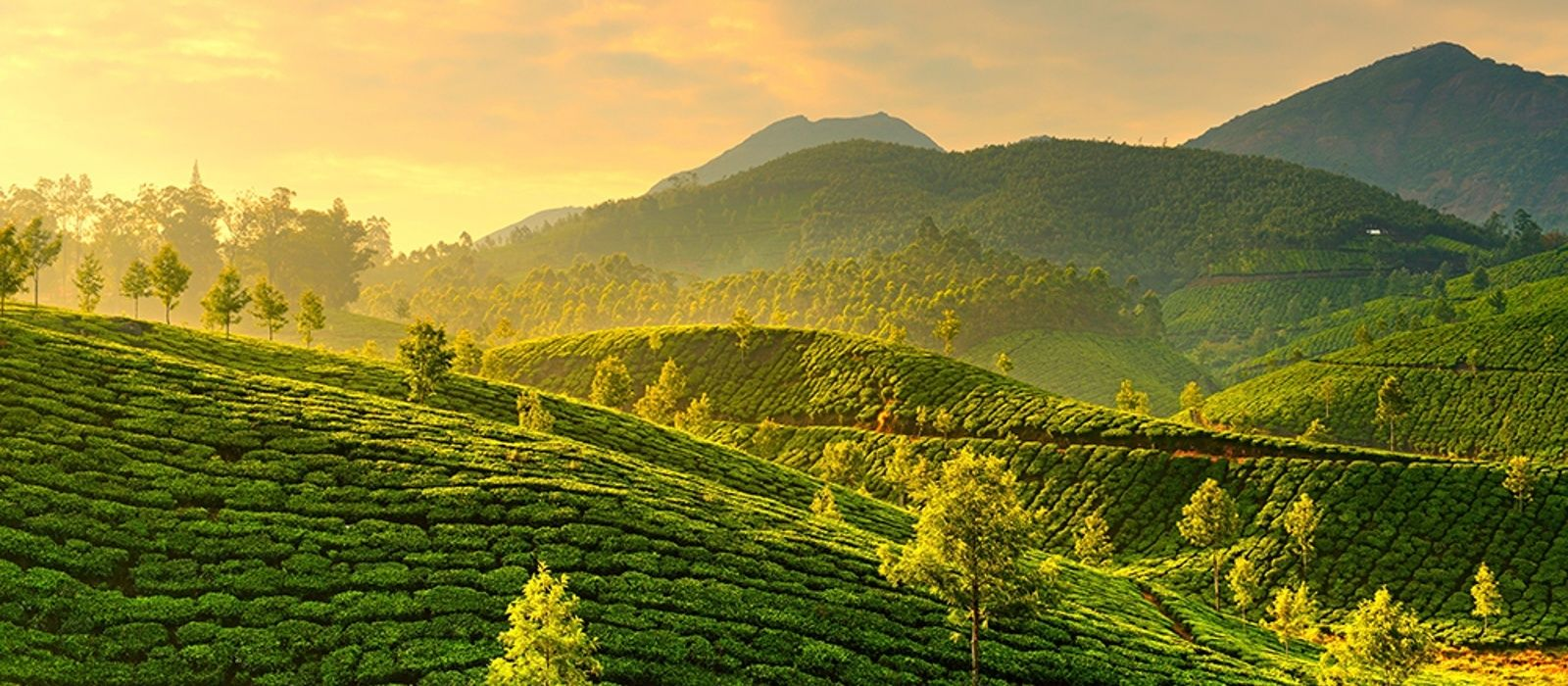 Munnar Tours from Balaji Tour Packages