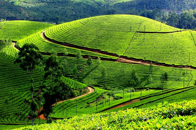 Munnar by Balaji Tour Packages
